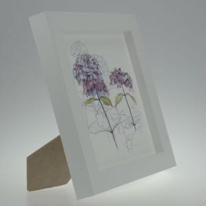 'Purple Hydrangea'