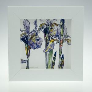 'Purple Iris'