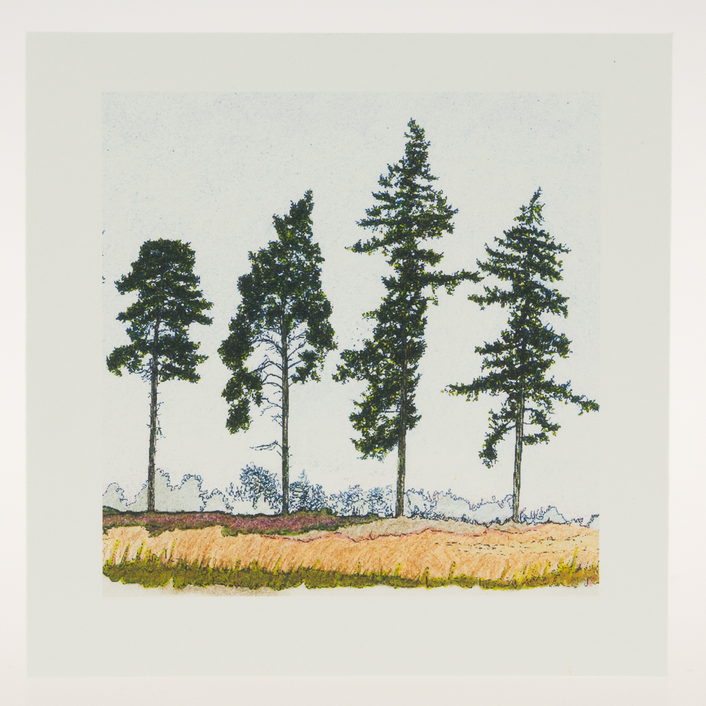 'Four Spring Pines'-greeting card-RSPB The Lodge
