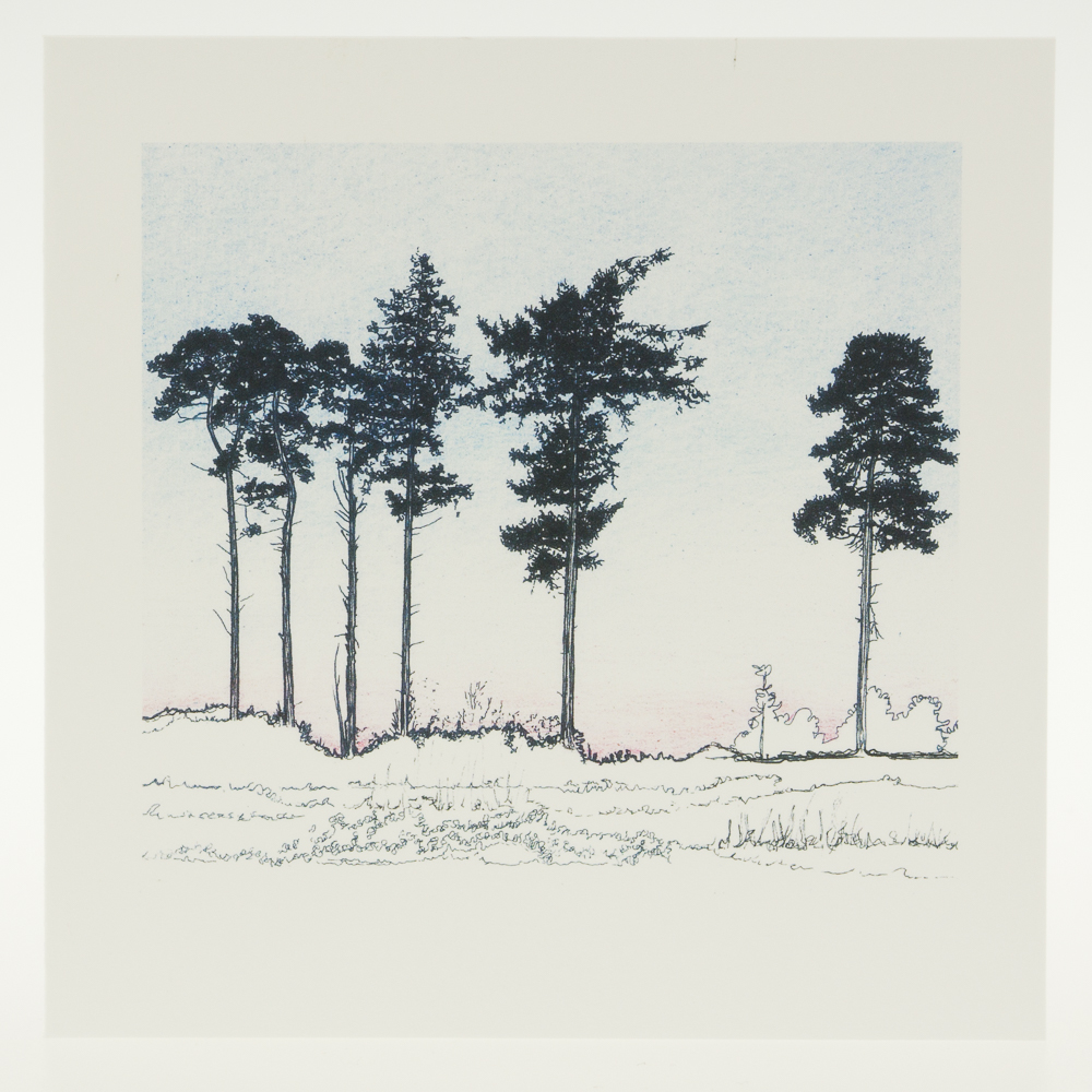 'Six Winter Pines'-greeting card-RSPB The Lodge