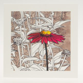 'Red Echinacea'-greeting card-Pensthorpe Natural Park
