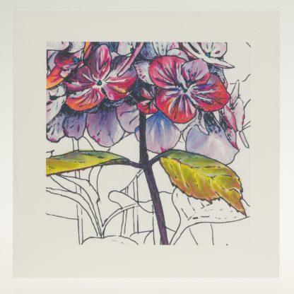 'Purple Hydrangea' detail-greeting card-Stoneywell Cottage