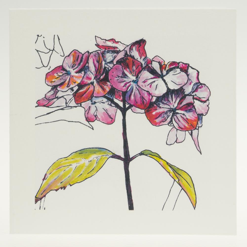 'Purple Hydrangea' bloom-greeting card-Stoneywell Cottage