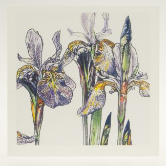 'Purple Iris'-greeting card-Stoneywell Cottage