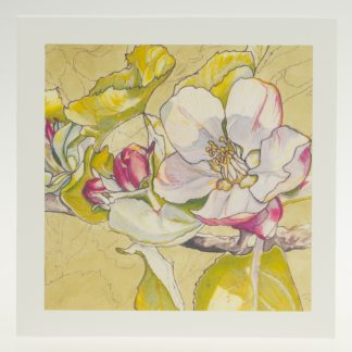 'Apple Blossom on Pastel'-greeting card-Stoneywell Cottage