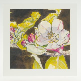 'Apple Blossom on Umber'-greeting card-Stoneywell Cottage