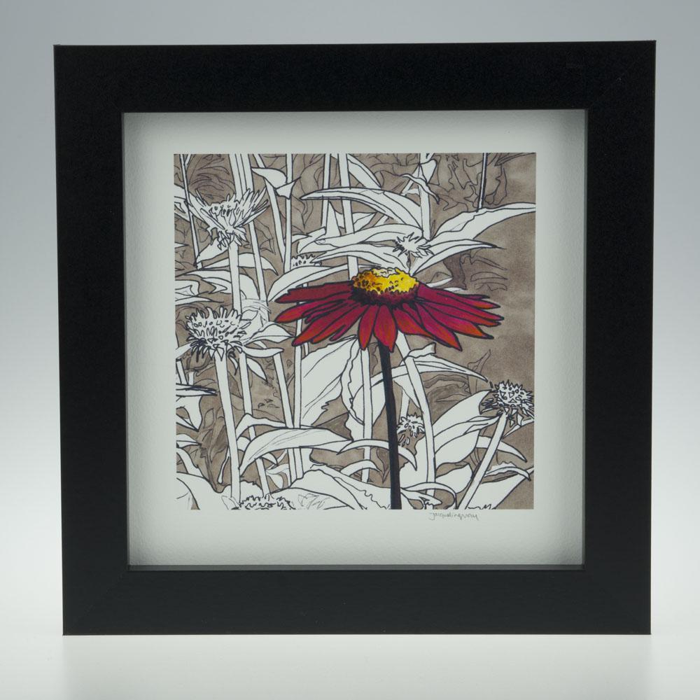 'Red Echinacea'-framed print -Pensthorpe Natural Park