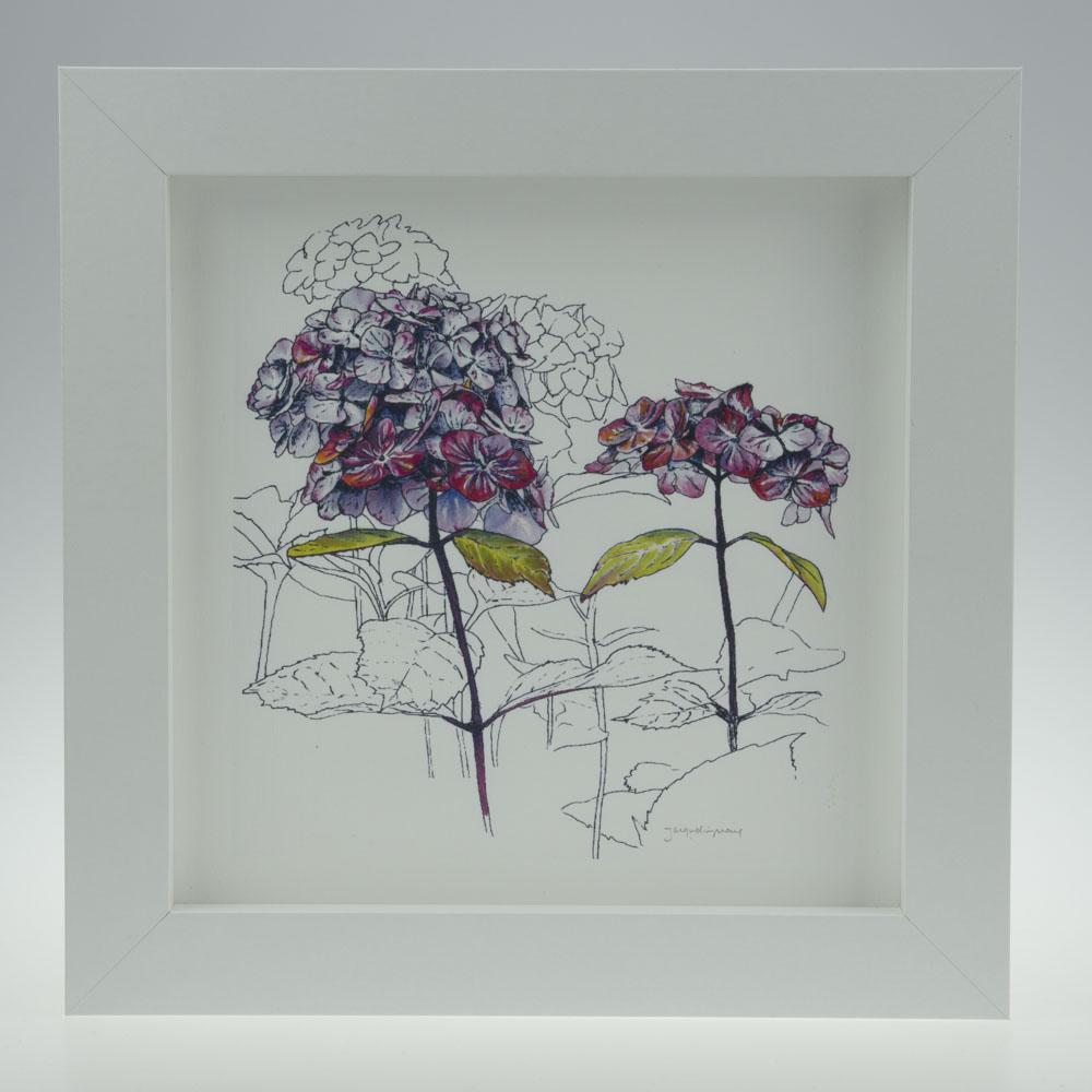'Purple Hydrangea'-framed print -Stoneywell Cottage