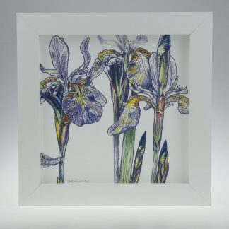 'Purple Iris'-framed print -Stoneywell Cottage