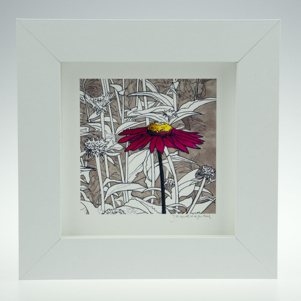 Red Echinacea-Framed Prints - Small Square-Pensthorpe Natural Park