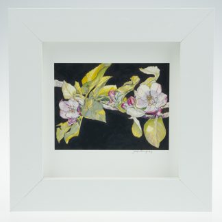 'Apple Blossom on Umber'-framed print -Stoneywell Cottage