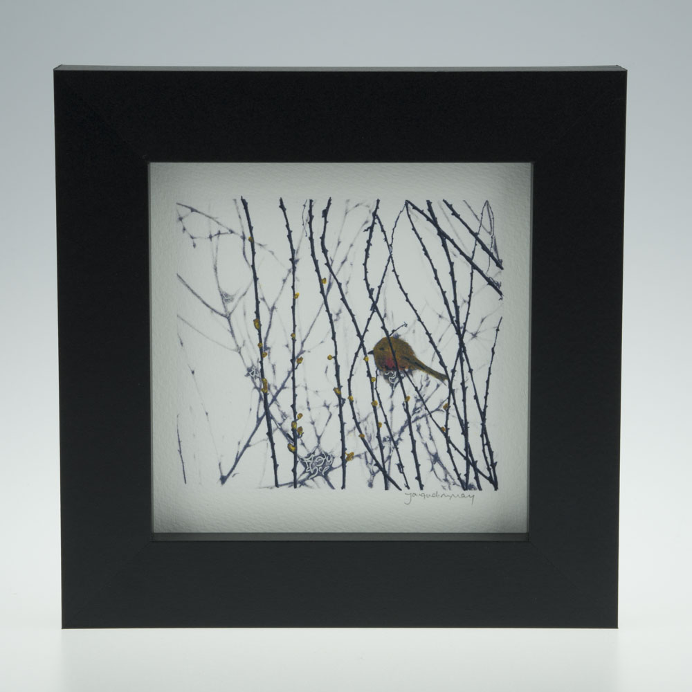 'Garden Robin on White '-framed print -Artists Garden in January