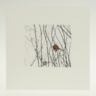 'Garden Robin on White'-greeting card-Artists Garden in January