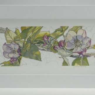 'Apple Blossom'-Framed print -Stoneywell Cottage