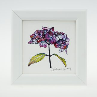 'Purple Hydrangea' bloom-framed print -Stoneywell Cottage