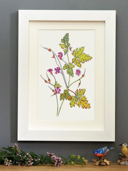 'Herb Robert' mounted print